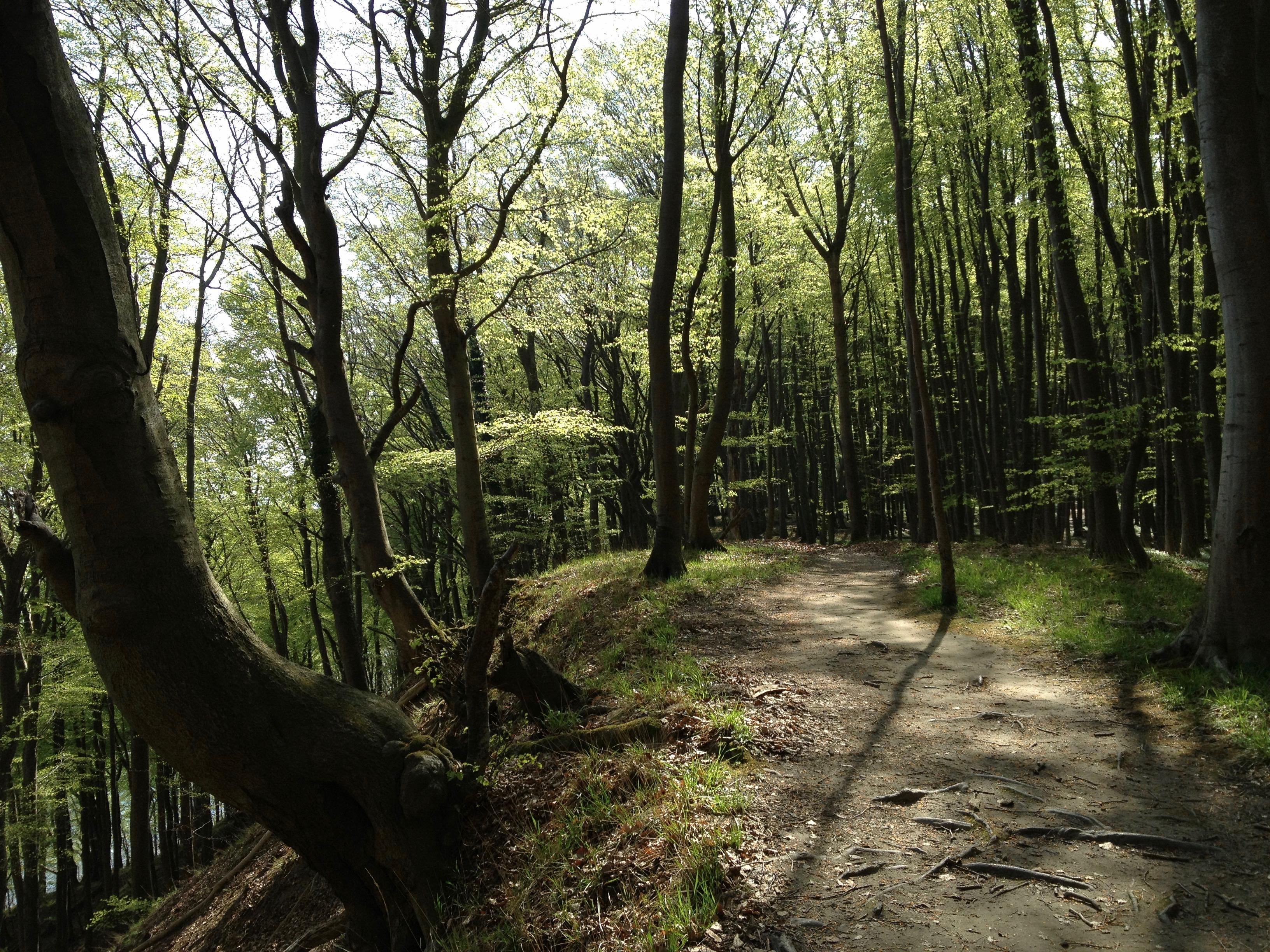 Rügen: Hochuferweg, Laufweg - Frühjahr 2013