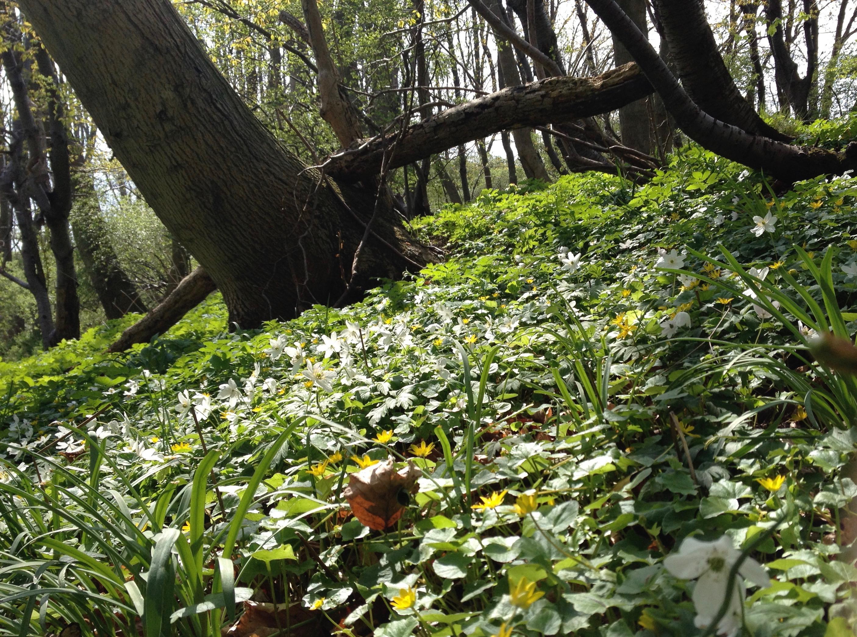 Rügen: Frühlingsanfang am Hochuferweg -Frühjahr 2013