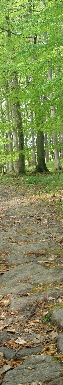 Rügen: Nationalpark - Weg in der Nähe des Kieler Bachs - Frühjahr 2013