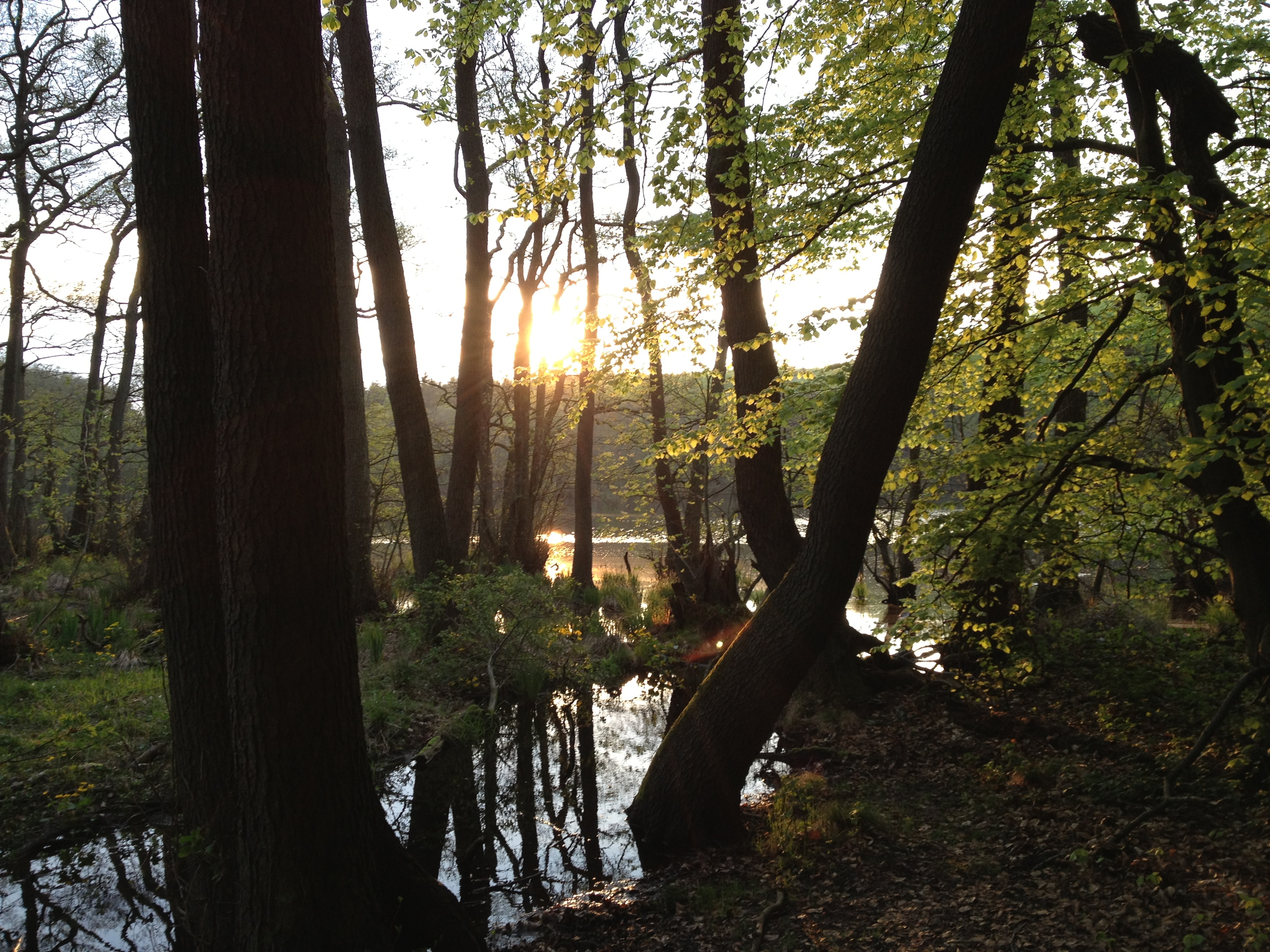 Rügen: Herthasee - Frühjahr 2013